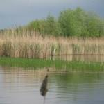 warsztaty ornitologiczne 037